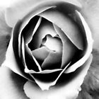 Abstract Rose by Geckojoy