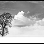 Snowy Freedom by andyallenby