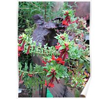 Balck leaves Red Flowers  Poster