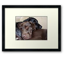 Its a Dogs Life Framed Print