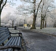 Frosted Bench by Greg Brotherton