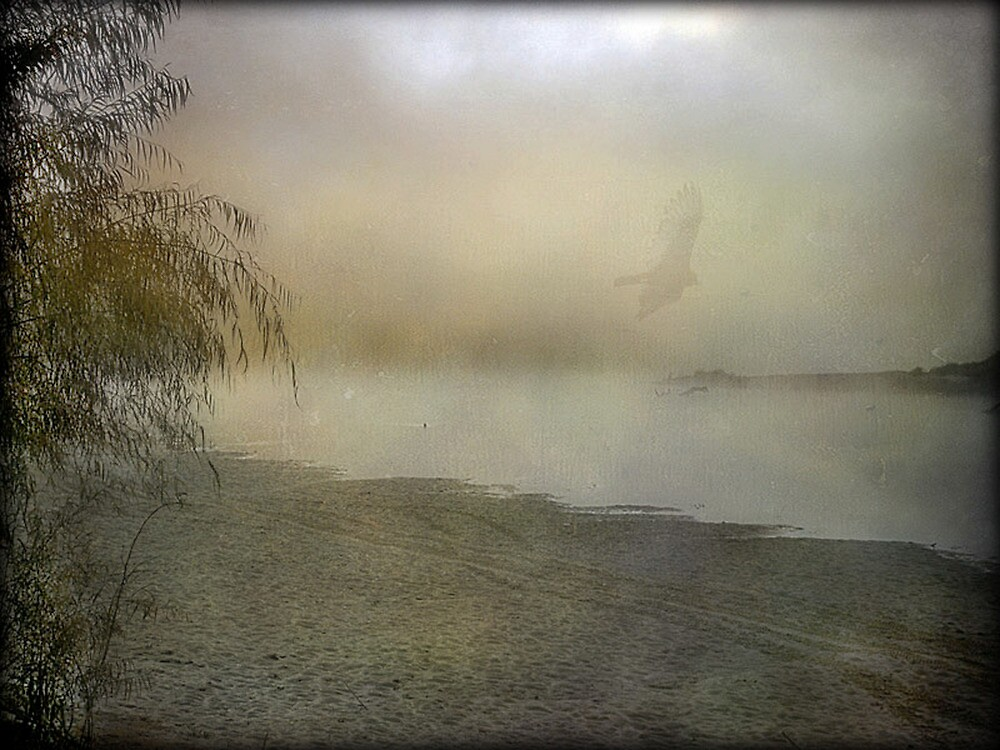 Another Foggy Morning by DottieDees