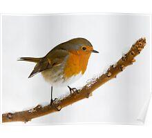 Robin Repose Poster
