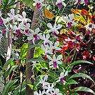 Foster Botanical Garden Orchids by Clark Thompson