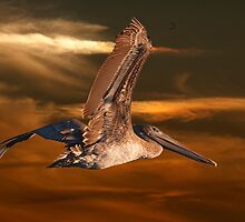 Brown Pelican Fly By by TJ Baccari Photography