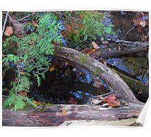 Fallen tree, Cedar Bog, Ohio  Poster