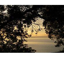 An ocean through the trees Photographic Print