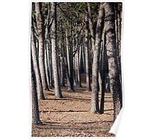 Tree Trunk Forest Poster