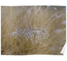 Ornamented grass Poster