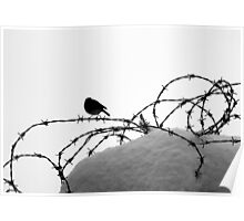 Bird on barbed wire Poster