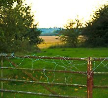 wired fence  by fhcphotos