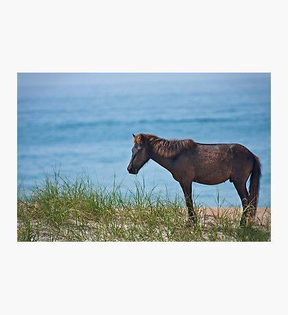 Blue Grass Stallion Photographic Print