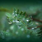 Rain drops are falling  by chloemay