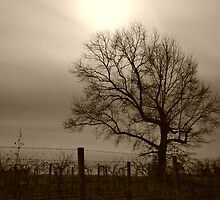 Over The Vineyards I Stand by Sharon Woerner