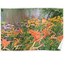 Wildflowers - Memorial Park, Port Credit, ON Poster