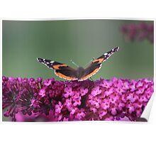 Tiger Moth 2 - Port Credit, ON Poster