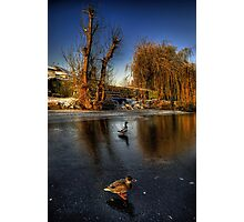 Ducks On Ice  Photographic Print