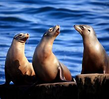 Sealion Trio by Daniela Pintimalli