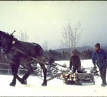 Hauling Firewood on Holy Cow Farm by mel zimmer
