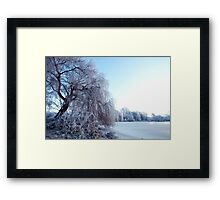 Weeping willow in morning frost Framed Print