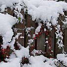 Rowan Bush in the Snow by Tom Gomez
