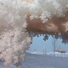 Snowflake Shadows by Loree McComb