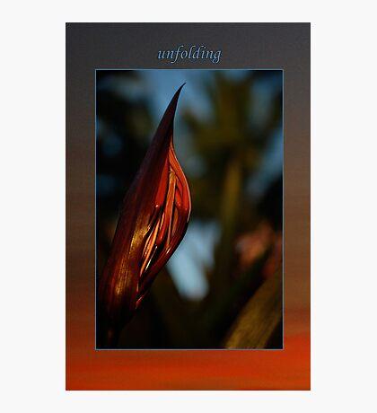 Unfolding Photographic Print