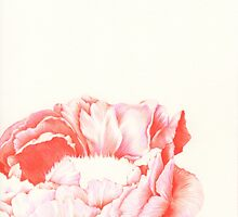 peony by Anna Frohmann