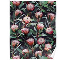 Evening Proteas - Pink on Charcoal Poster