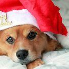 Merry Christmas! by Sangeeta