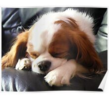 Dog napping Poster