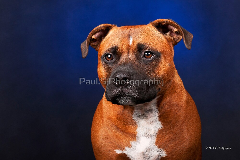 Junior by Paul.S Photography