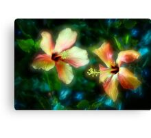 Two-colour hibiscus blooms Canvas Print