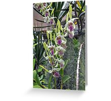 Foster Botanical Garden Orchids Greeting Card