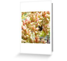Bumble Bee at work Greeting Card