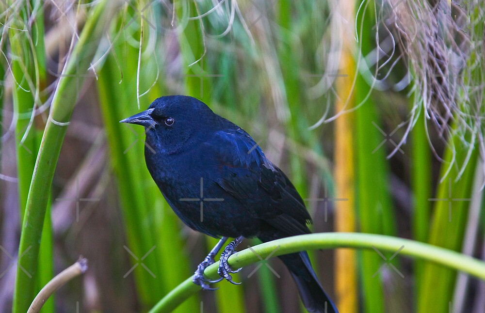 Hiding in the Tall Grass  by Heather Friedman