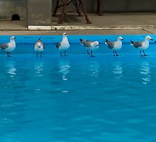 8 Seagulls - Swimming pool at Sumner New Zealand by Paul Gilbert