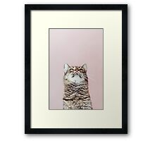 Beautiful cat looking up Framed Print