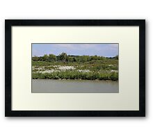 Daisies in the sun Framed Print