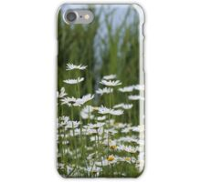 A field full of daisies iPhone Case/Skin