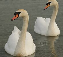 Synchronised Swans by Christopher Cullen