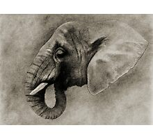 L' ELEPHANT Photographic Print