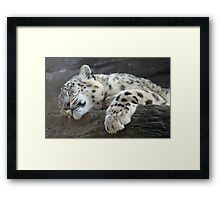 Sleeping snow leopard Framed Print