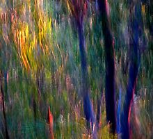 Faeries in the Forest by Michelle  Wrighton