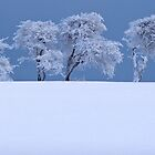 Northumberland tree's by chili