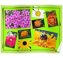 Essex Summer Flowers Collage Poster