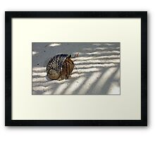 Little hermit crab Framed Print