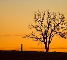 Sunset Silhouette by Michelle  Wrighton