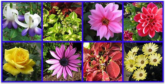 Summer Flowers and Plants Collage by BlueMoonRose