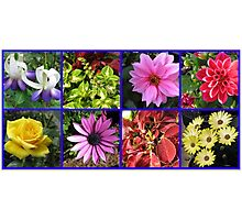 Summer Flowers and Plants Collage Photographic Print